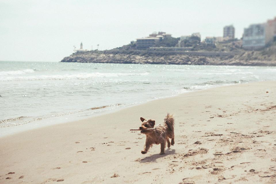 01 foto mascota en la playa