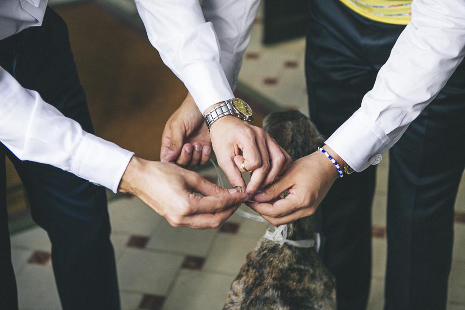 07 anillos en lazo de mascota