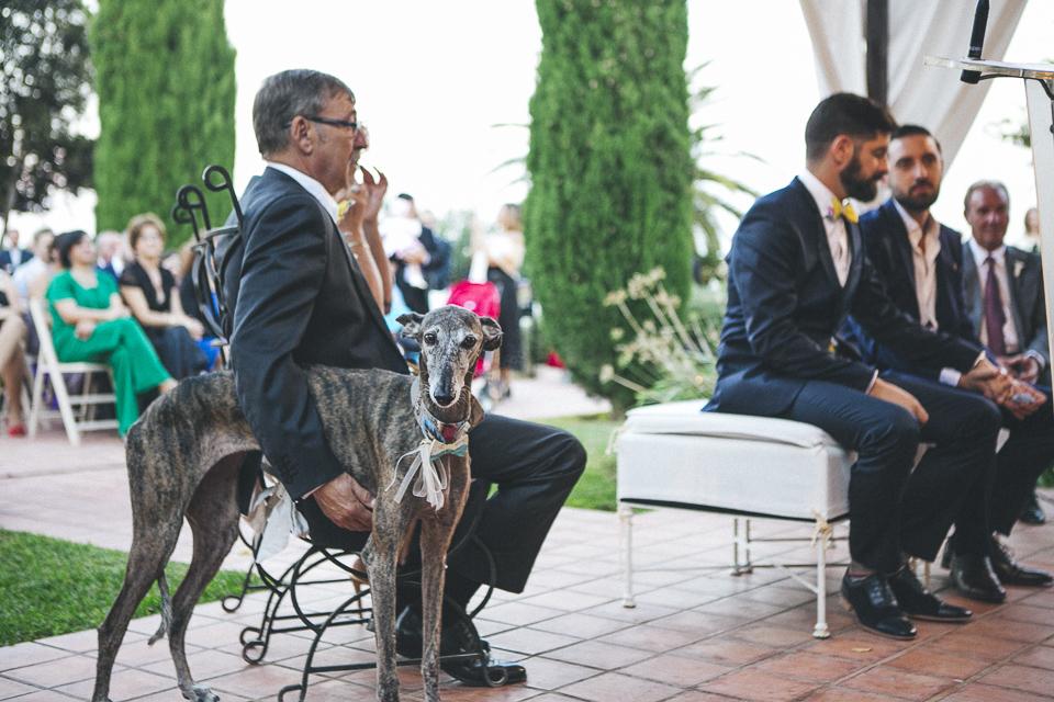 34 mascota en ceremonia