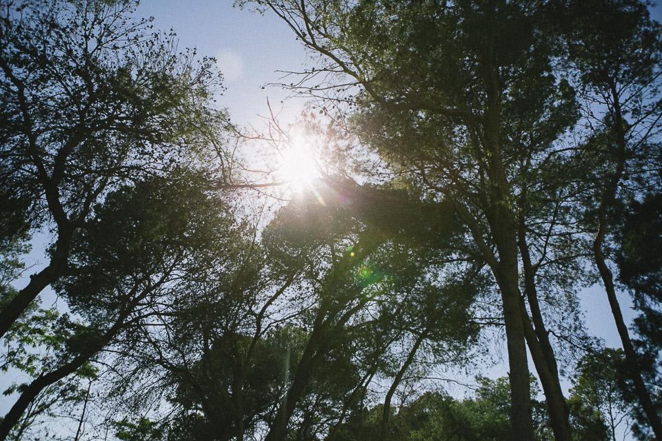 48 sol entre arboles