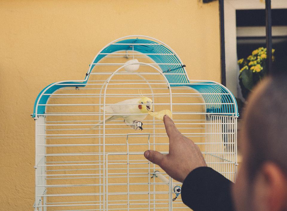 11 mascota periquito en jaula