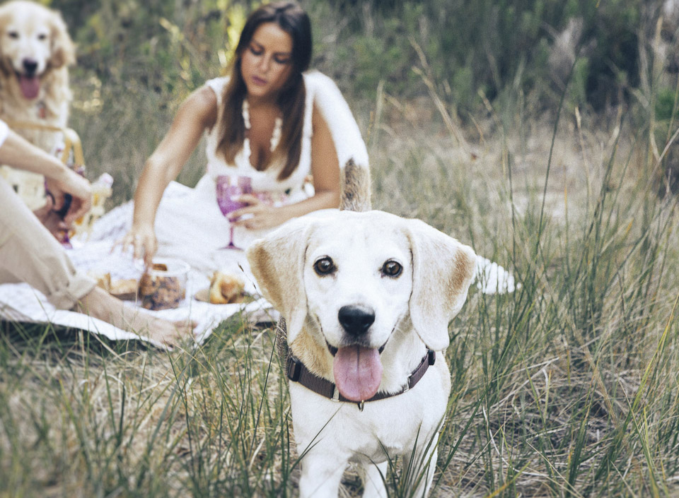 05 romantico reportaje preboda con mascotas